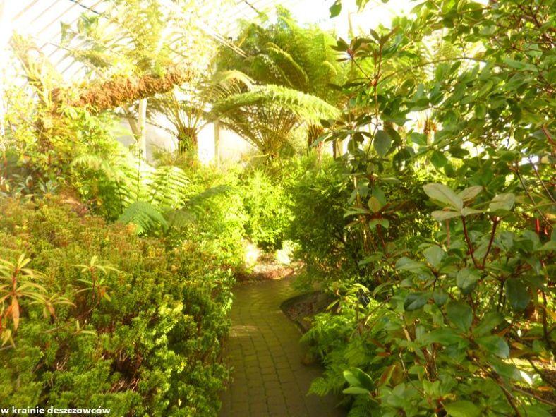 Botanic Gardens Glasnevin (10)