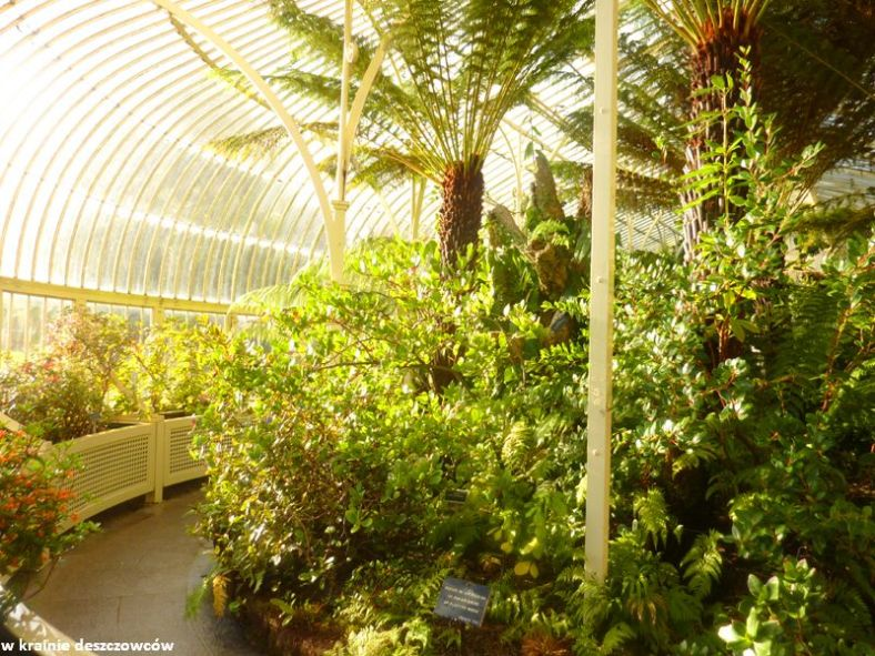 Botanic Gardens Glasnevin (11)