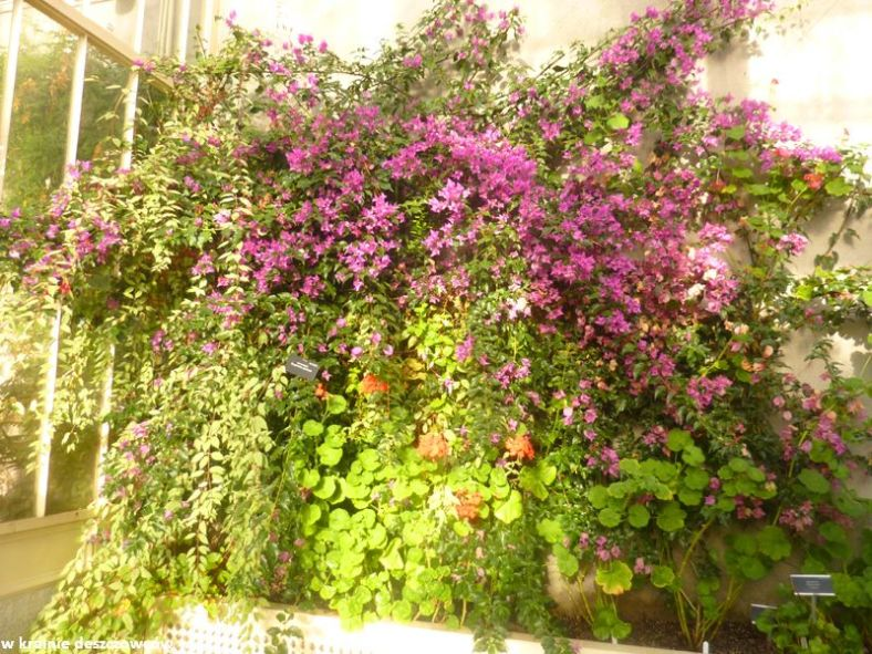 Botanic Gardens Glasnevin (12)