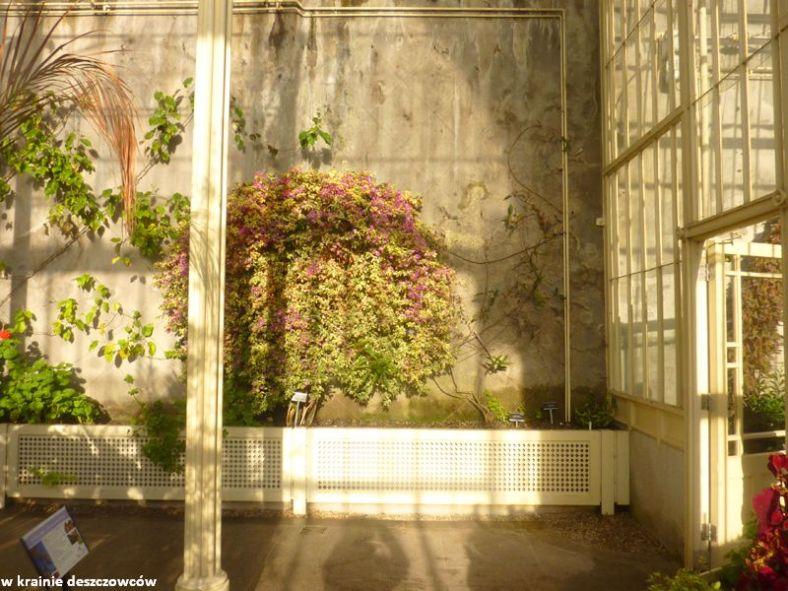 Botanic Gardens Glasnevin (13)