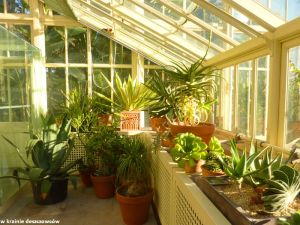 Botanic Gardens Glasnevin (5)