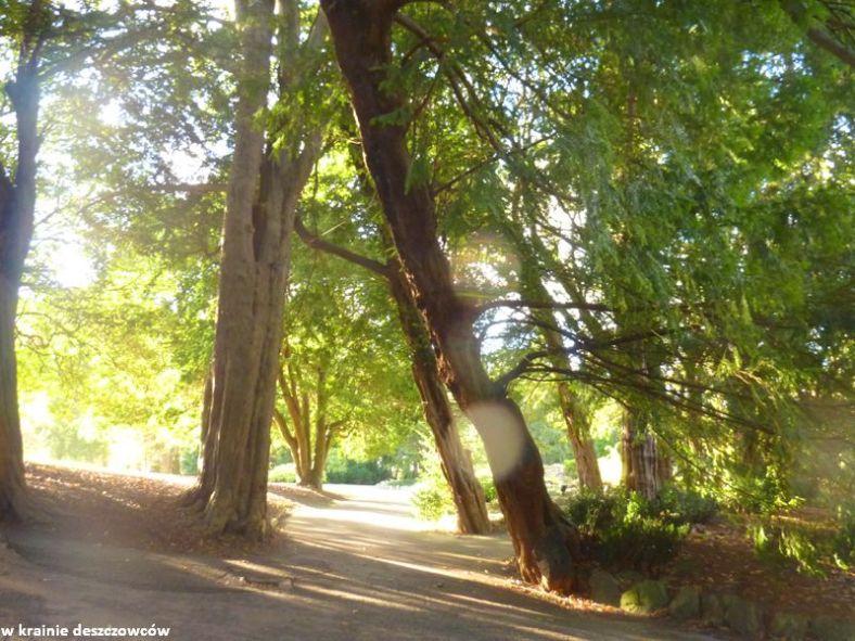 Botanic Gardens Glasnevin (9)