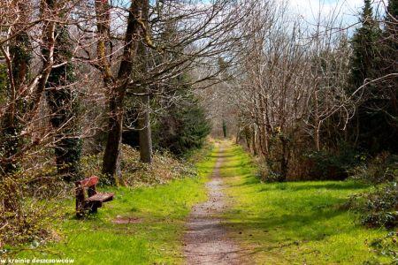 Donadea forest (1)