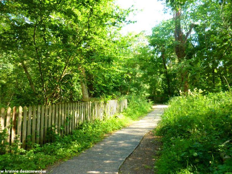 oak park forest park (10)