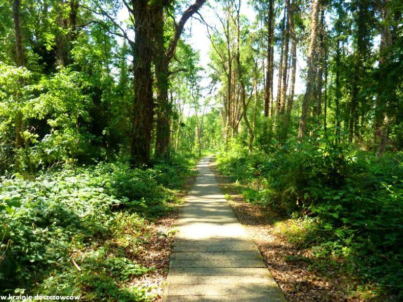 oak park forest park (4)