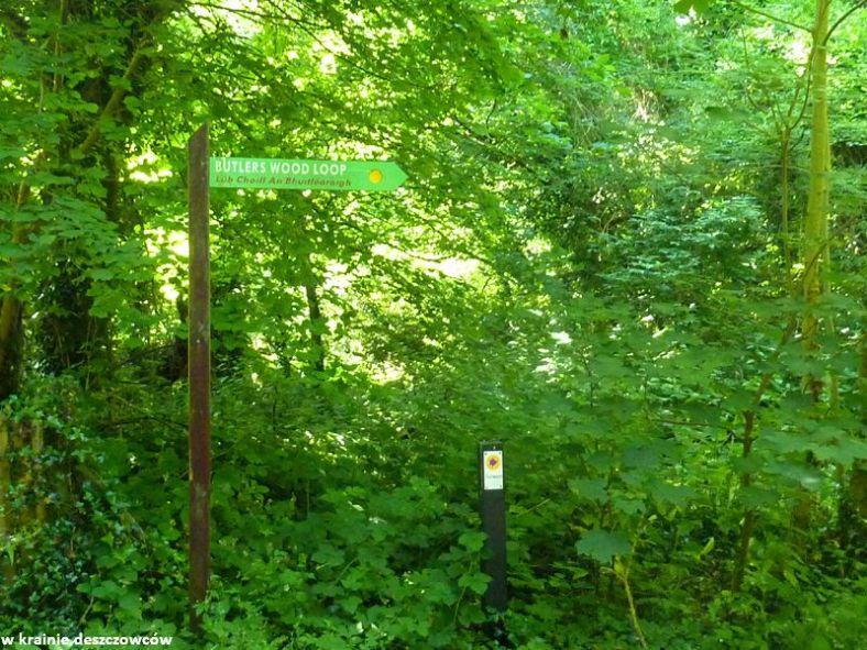 oak park forest park (6)