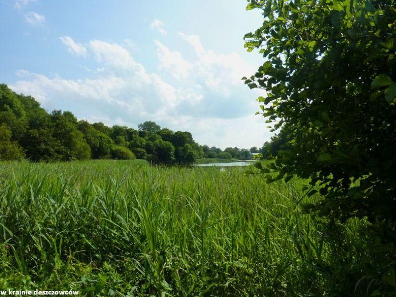 oak park forest park (8)