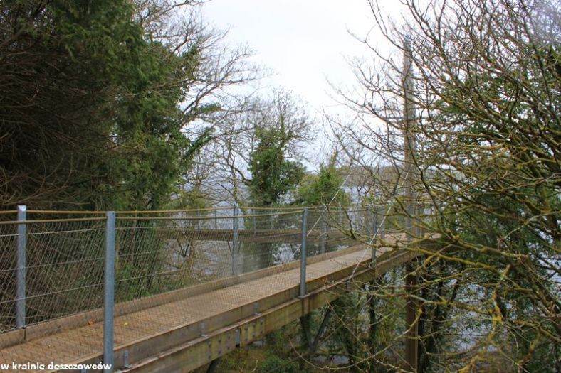 tree conopy walk (1)