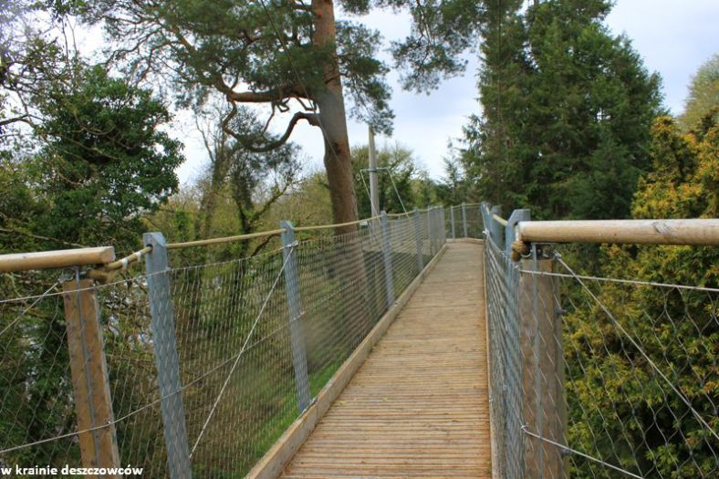 tree conopy walk (2)