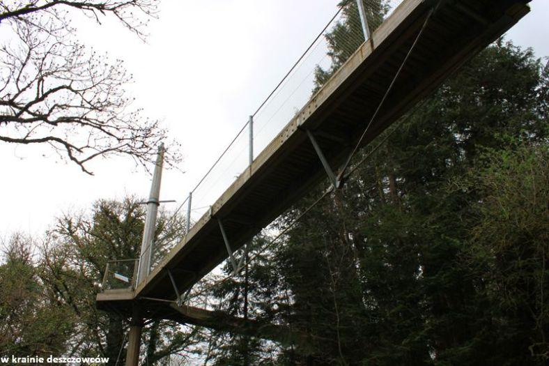 tree conopy walk