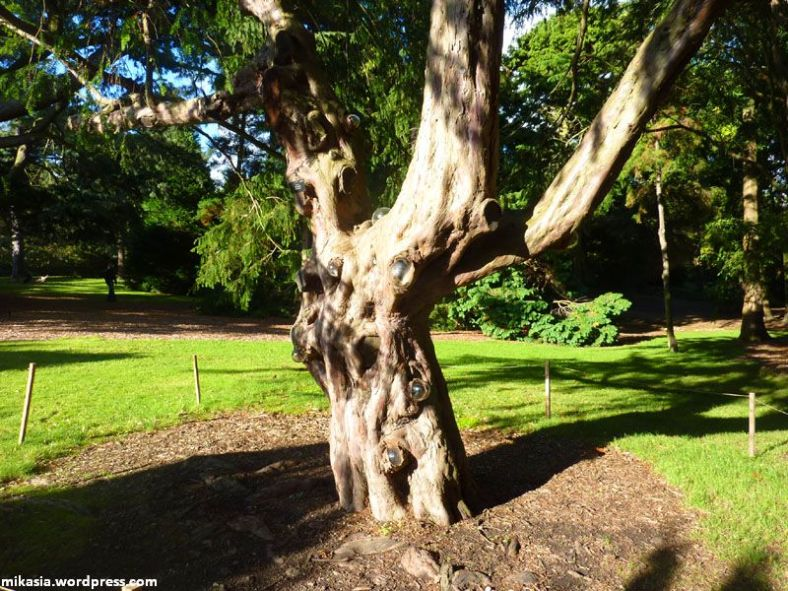 national botanic gardens (14)