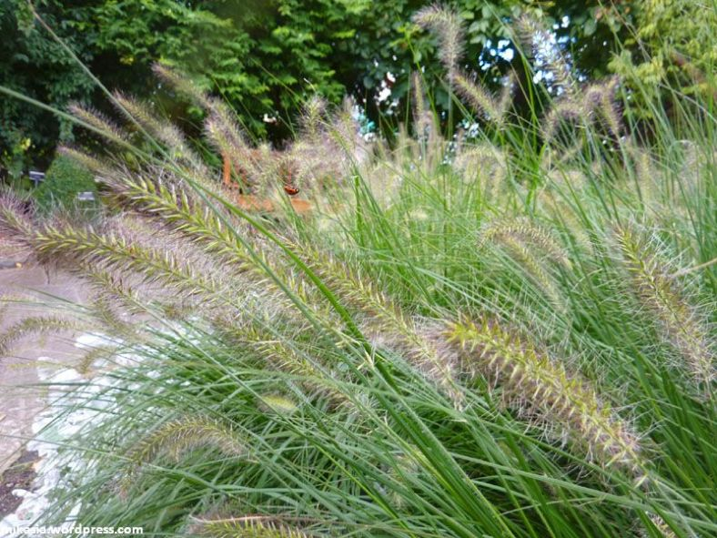 national botanic gardens (6)