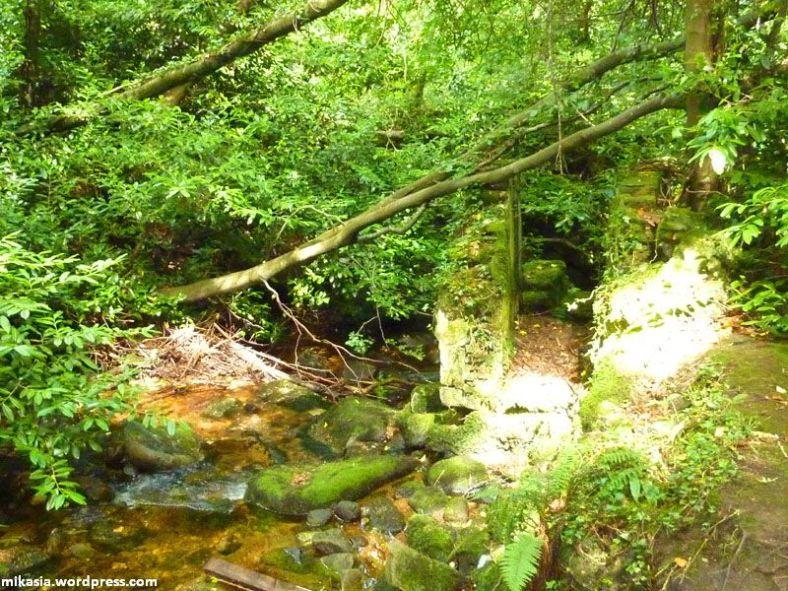 massey's woods (12)