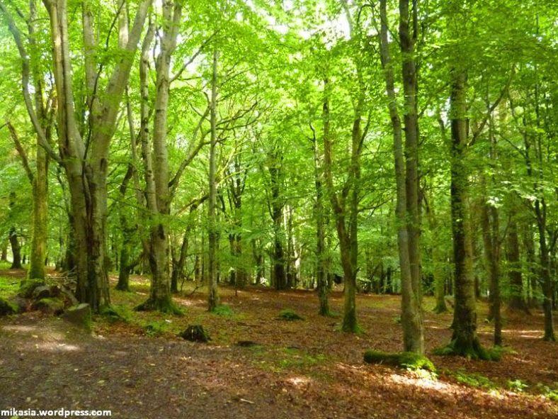 massey's woods (3)