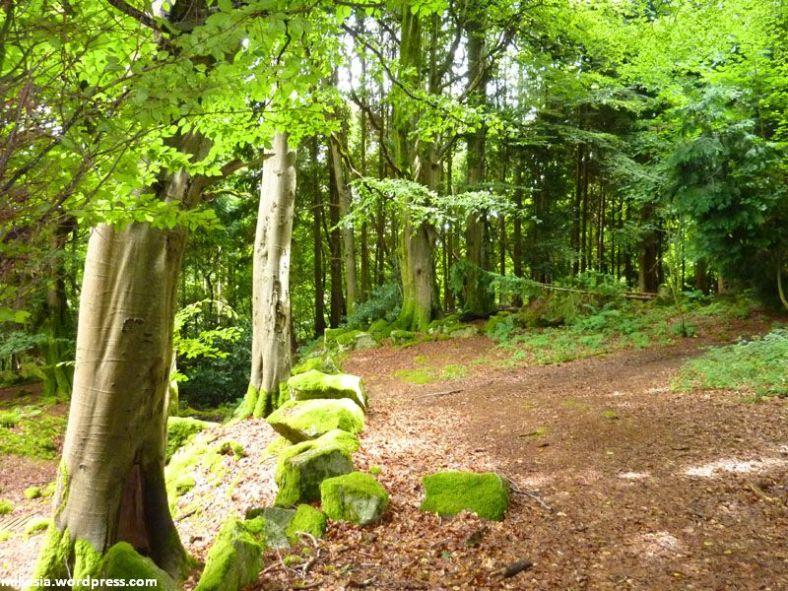 massey's woods (4)
