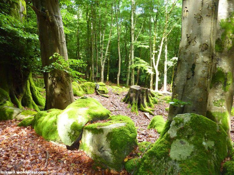 massey's woods (5)
