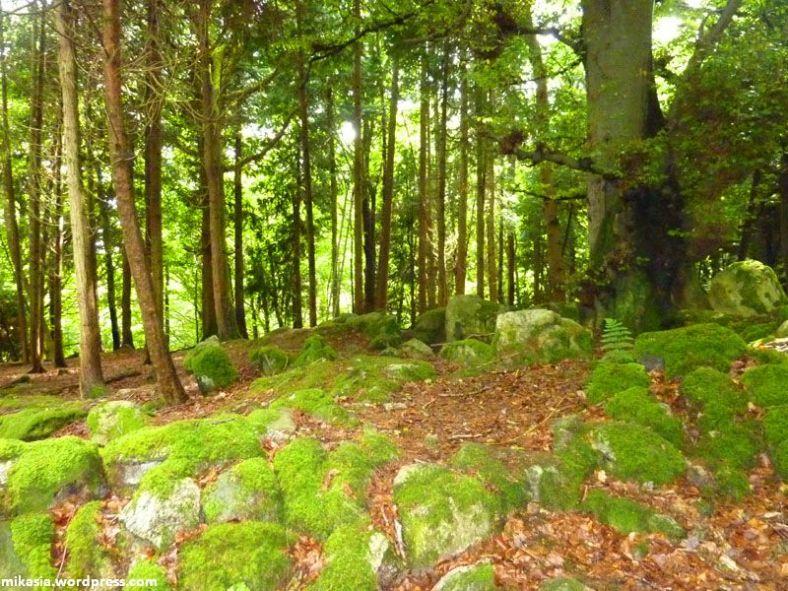 massey's woods (6)