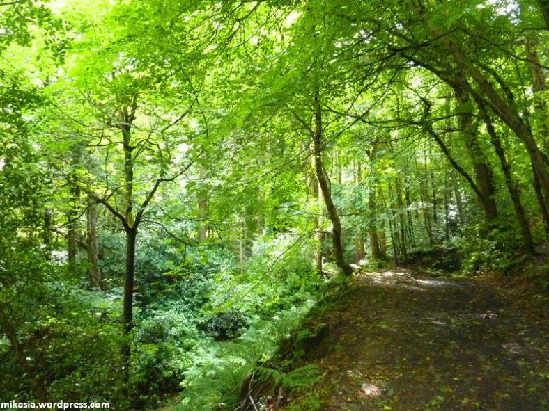massey's woods (8)