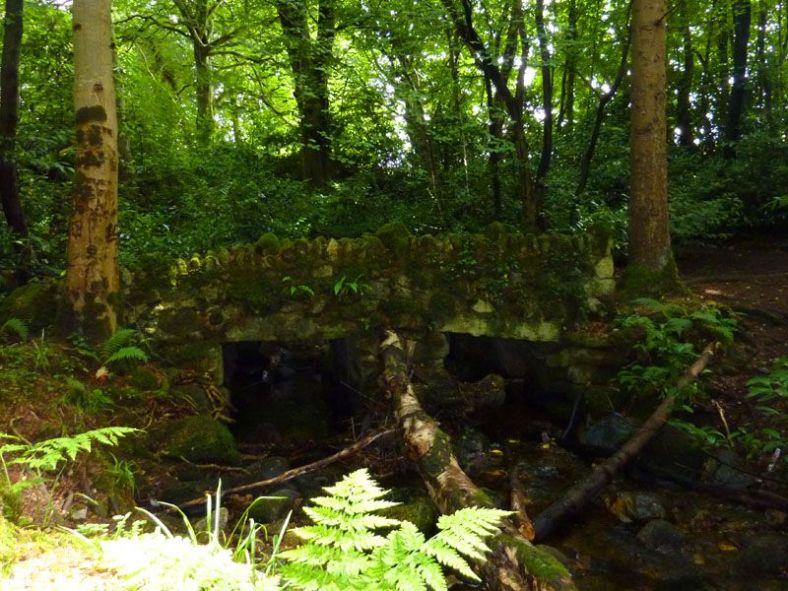 massey's woods (9)