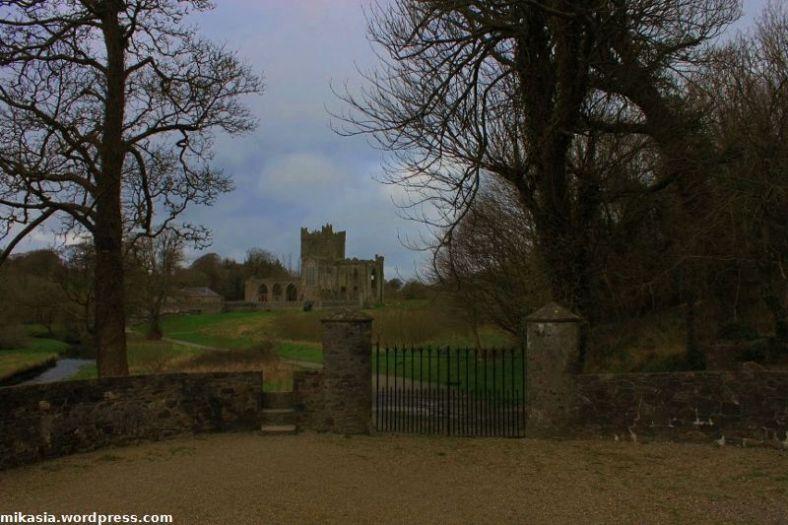 Tintern Abbey (13)