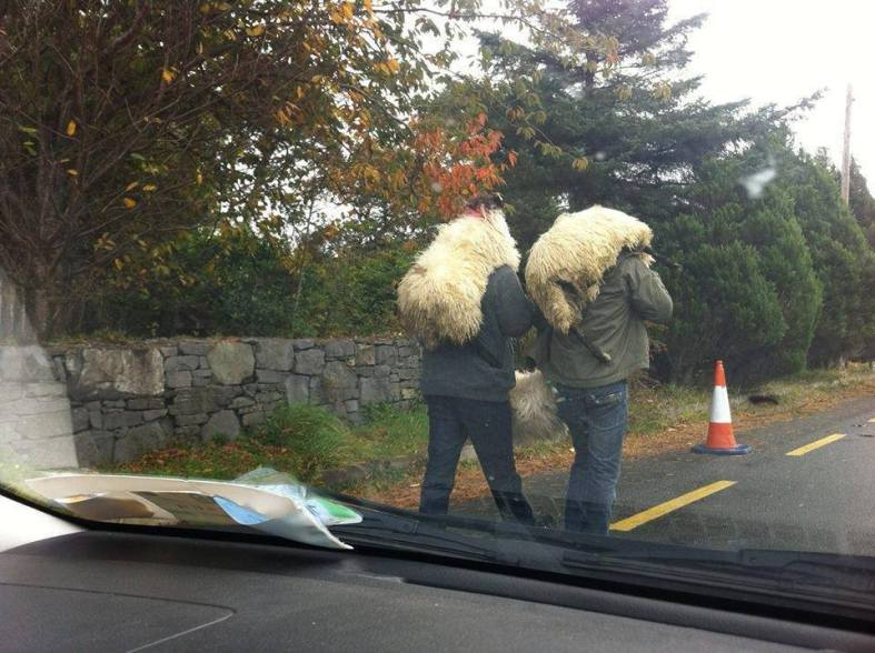 meanwhile in Cavan