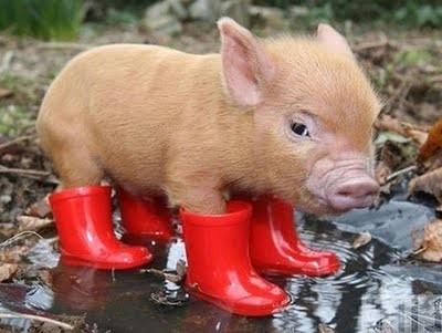 iberian-pigs-e1332323893842