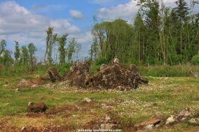 killykeen forest park (9)