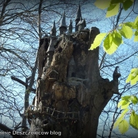 Fairy trees and fairy door - wróżki (nie tylko) dla dzieci w Irlandii.