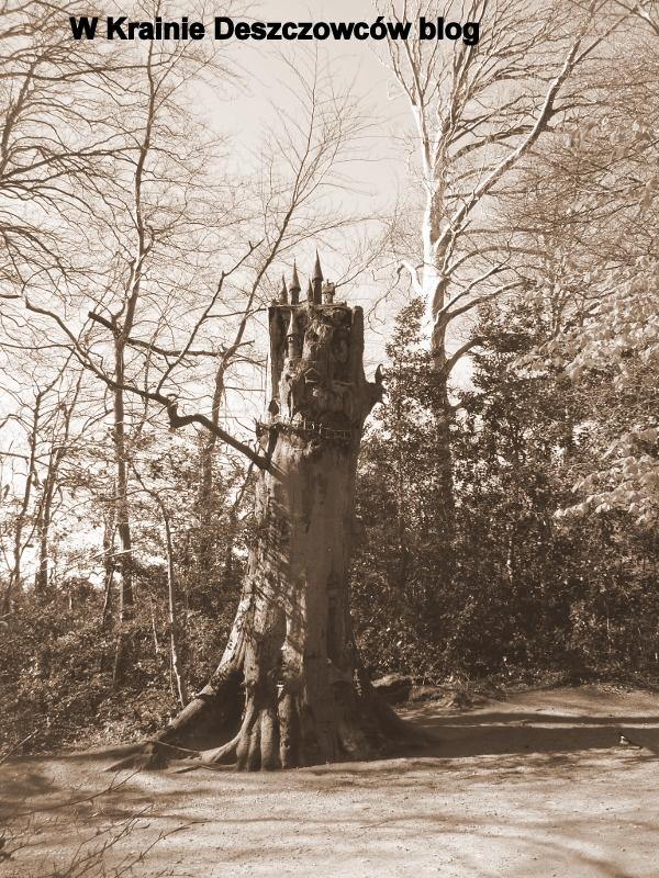 Fairy Tree Marley park (11)