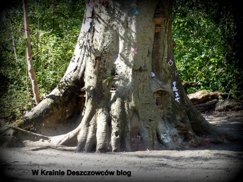 Fairy Tree Marley park (12)