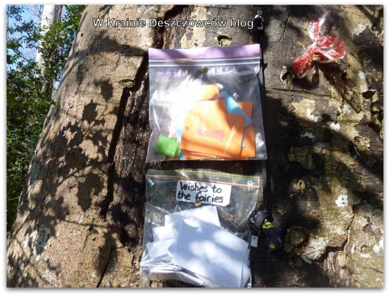 Fairy Tree Marley park (7)