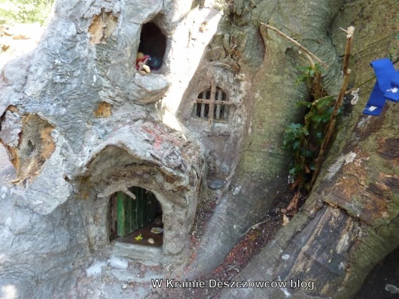 Fairy Tree Marley park (9)