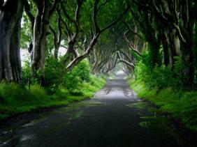 dark-hedge-of-ballymoney